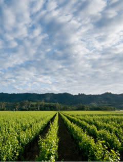 Robert Mondavis To Kalon Vineyard utsedd till Kaliforniens främsta!