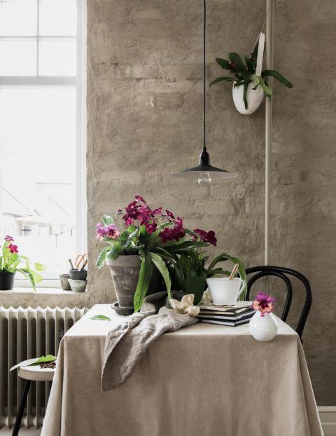 Modern inredning med klassiska krukväxter - tolkat av Daniella Witte