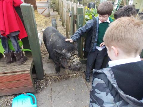 FARMYARD FRIENDS: Brimrod Primary School