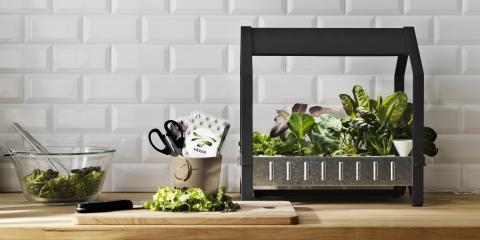 Forår er plantetid - også hjemme i dit køkken.