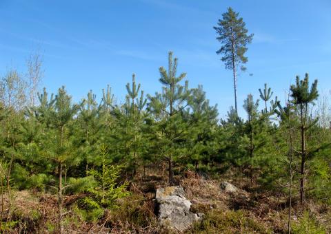 EU-kommissionens politik för bioenergi haltar betänkligt