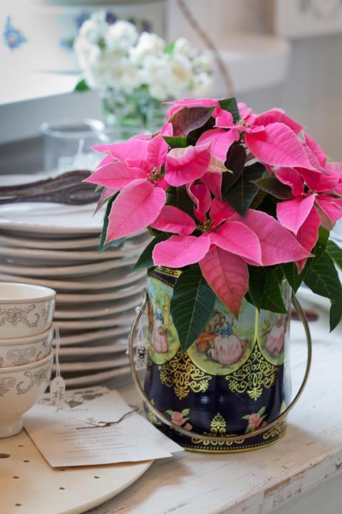 Mäster Gröns växter speglar säsongen på din fönsterbräda och bidrar till Cancerfondens Rosa Bandet-kampanj.