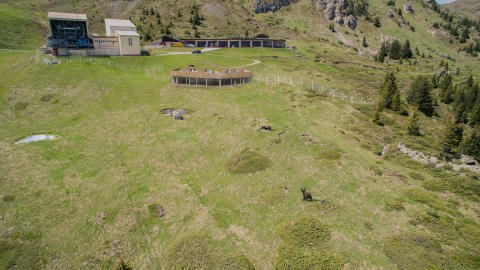 Neues Bärenland in Arosa (Graubünden)
