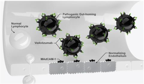 Takeda belegt mit bisher größter klinischer Studie zu chronischentzündlichen Darmerkrankungen das medizinische Potenzial des neuen Wirkstoffes Vedolizumab