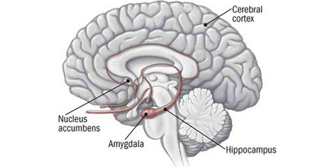 Hjernekemi-alfa