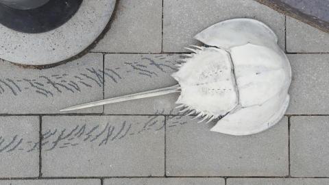 Välkommen till invigning av konstverk med dolksvansar på Råå