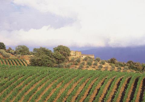 Col d´Orcias vackra vingårdar i Toscana