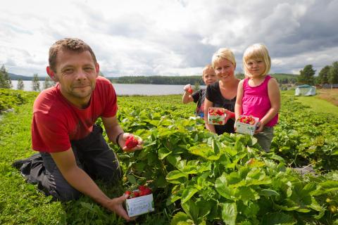 KRAV-märkta jordgubbar nära dig!