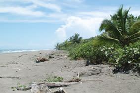 Costa Rica: Besuch der Meeresriesen