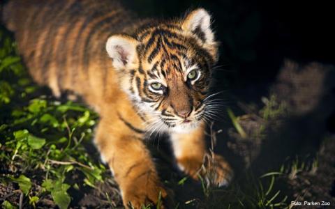 Djurskyddet Sverige välkomnar granskning av djurparker