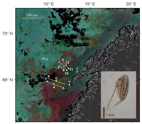 Havets røde gull kartlagt fra satellitt