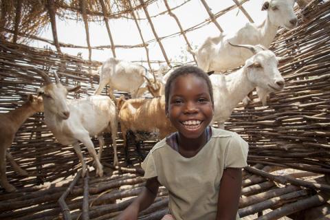 Perina från Zambia med sina getter