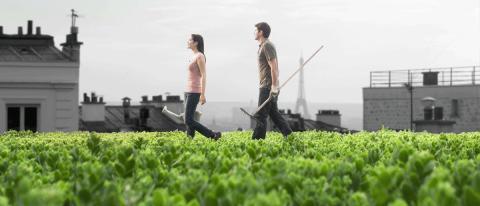BLOG POST: How to regulate urban agriculture - A forsaken but major ecosystem service