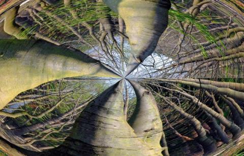 Rotbuchen- Poesie des Waldes