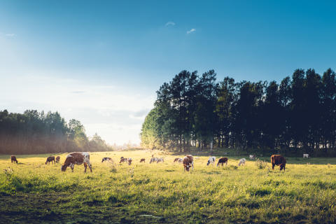 Luonto ja ekosysteemipalvelut mahdollistavat Valion toiminnan
