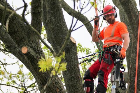 Hvilan fortsätter utbilda Sveriges bästa arborister