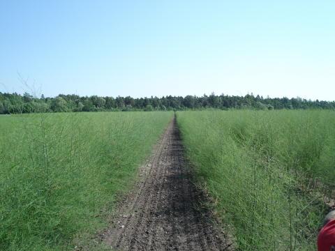 Vägen framåt för ekologisk odling