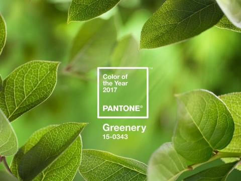 Greenery Pantone Colour of the Year!