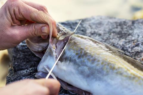 Kjempemåned for norsk sjømateksport