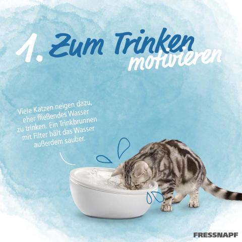 Infostrecke Katzen zum Trinken animieren 02
