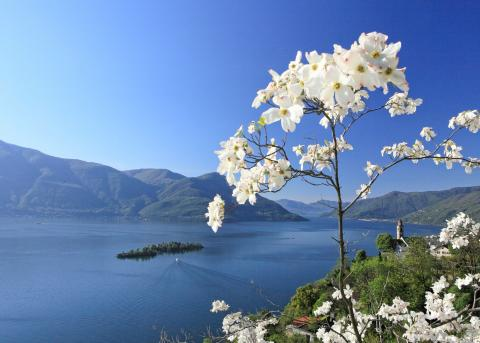 Frühlingswandern am Lago Maggiore (c) Ticino Turismo / Christof Sonderegger