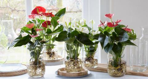 Odla blommor utan jord - snyggt, annorlunda och enkelt!