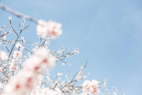 Populære pasteller i forårets boligindretning