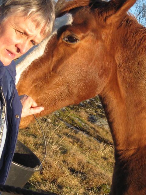 Hästuppfödare Monica Björkdahl på regelförenklingsresan