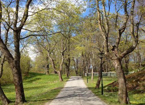 Träd i prinsens park