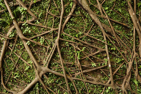 Underjordisk mikrobenetværk, der forbinder verdens træer, er kortlagt for første gang
