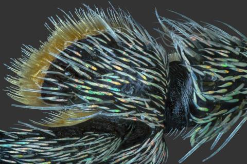 © Adalbert Mojrzisch, Germany, Finalist, Professional competition, Natural World & Wildlife, 2020 SWPA (2)