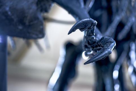 "Klo av T.rex ""Tristan Otto"""