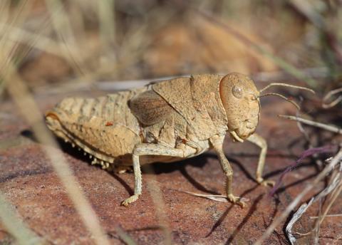 Internationaler Aktionsplan für den Insektenschutz