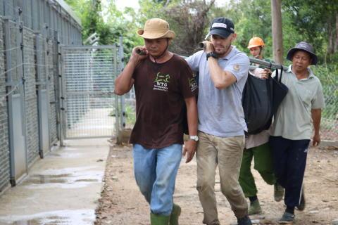 Helfer transportieren einen betäubten Kragenbären in das neue Schutzzentrum im Cat Tien Nationalpark in Südvietnam.