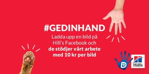 """Djurskyddet och Hill's förstärker samarbetet med kampanjen """"GE DIN HAND"""""""
