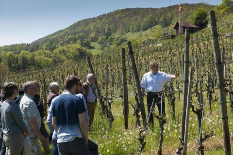 Tag der offenen Weinkeller in der Schweiz