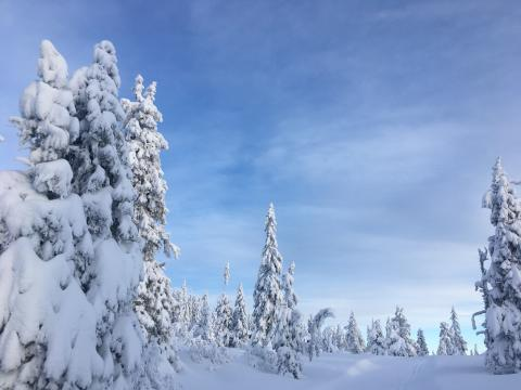 Populær skiutleie fra SiO Athletica