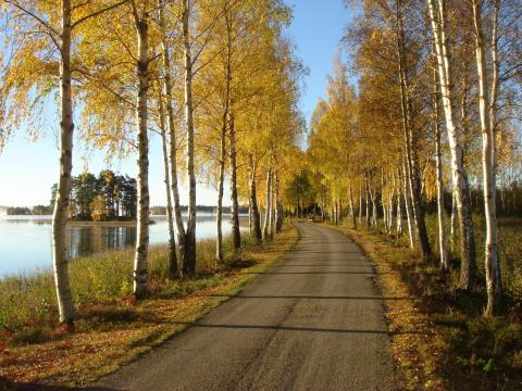 Efterårsferie for hele familien på svensk