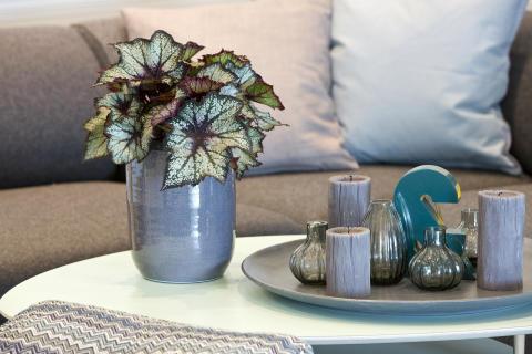 Friskt og lunt med grønne planter hjemme