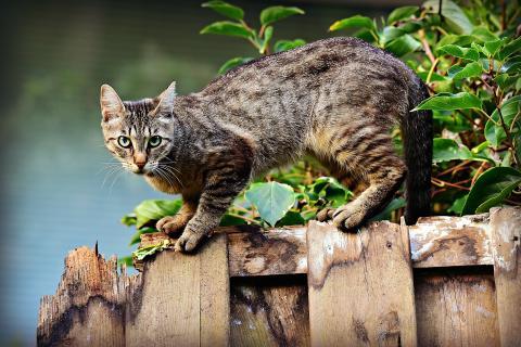 Kattens status höjs med nya djurskyddsregler om hållande av hundar och katter