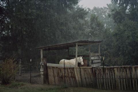 Från utställningen Hurricane Season med Hannah Modigh
