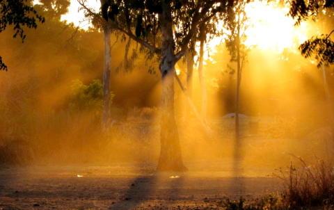 Bild från Zimbabwe, där Hökerum Bygg är med och finansierar bevarande av urskog.