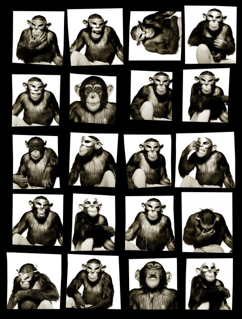 Monkeys With Mask New York 1994