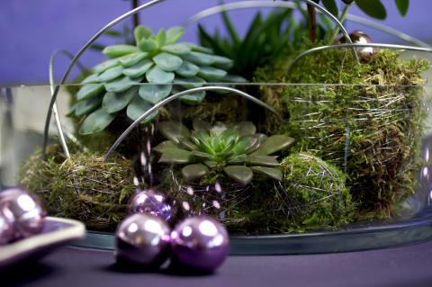 Fetbladsväxter