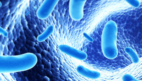 The importance of bacterial behavior