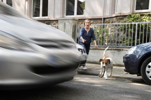 Haustier überfahren – Was tun?