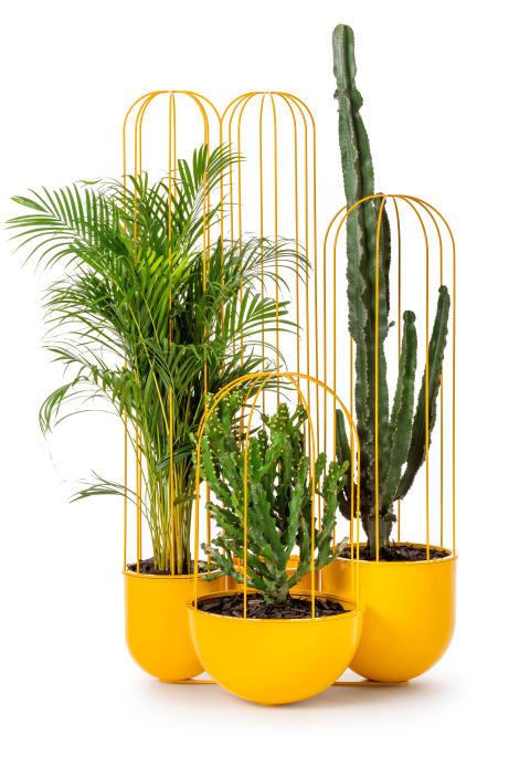 Cacti planteringskärl, design Anki Gneib