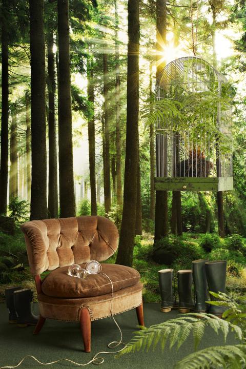 Sunbeam Through Trees - Photowall