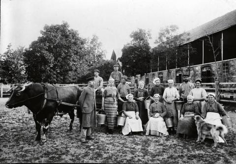 Ladugården hade nio mjölkerskor, fyra ladugårdskarlar och en ladugårdsförman.