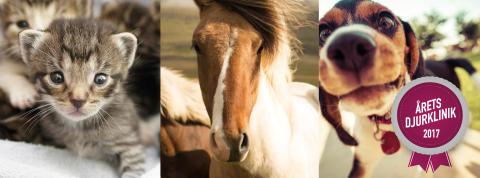 Sveriges djurägare röstar fram Årets djurklinik 2017